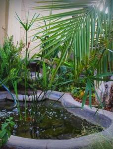 Khoi Pond